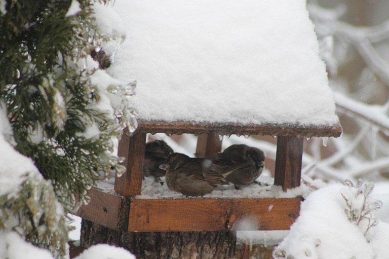 Zima 1314 Maciek 031 - small